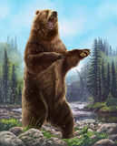 Aggressive Bear. Royalty Free Stock Photos