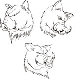 Aggressive boar heads Royalty Free Stock Images