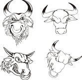 Aggressive bull heads Stock Photos