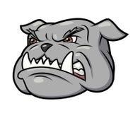 Aggressive bulldog 3 Royalty Free Stock Image