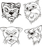 Aggressive cat heads Stock Image
