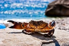 Aggressive crab Stock Photo