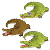 Aggressive crocodiles and crocodile with a bruise. Vector animals on a white background. Illustration Royalty Free Stock Photography