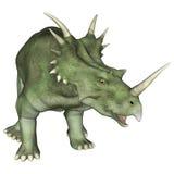 Aggressive Dinosaur Styracosaurus Stock Images