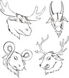 Aggressive heads of deers and goats Royalty Free Stock Photos