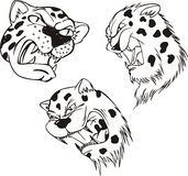 Aggressive leopard heads Royalty Free Stock Image