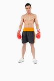 Aggressive looking young boxer Stock Photography
