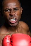 Aggressive Male Boxer Royalty Free Stock Photo