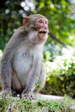 Aggressive monkey Royalty Free Stock Image