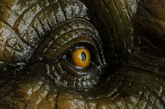 Aggressive T Rex eye. Aggressive T Rex model of dinosaurs stock images