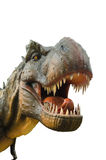 Aggressive T Rex on white background. Aggressive T Rex  dinosaurs on white background Stock Image
