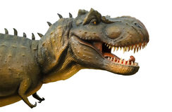 Aggressive T Rex on white background. Stock Image