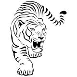 Aggressive tiger on hunting. Aggressive concealed large tiger on the hunting, hand drawing vector outline isolated on a white background Stock Photography