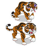 Aggressive tiger and tiger with a bruise. Vector Stock Images