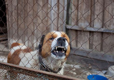Aggressiver Hund im Käfig Stockfotografie