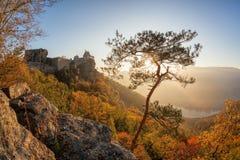 Aggstein kasztel z jesień lasem w Wachau, Austria Fotografia Stock