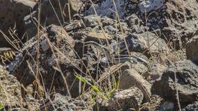 Agguato del serpente Fotografie Stock Libere da Diritti