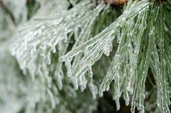 Aghi del pino del ghiaccio Immagini Stock Libere da Diritti