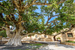 Agia Napa monastery courtyard entrance in Cyprus 3. A view of the Agia Napa monastery courtyard entrance and ancient fig tree in Cyprus Stock Images