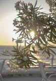 Agia Pelagia w Crete Zdjęcie Stock