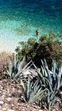 agia plażowy cephalonia efimia Zdjęcia Stock