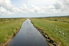 agicultural krajobrazu Obraz Royalty Free