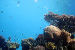żagiel eilat podmorski Zdjęcie Stock