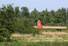 Żagiel w De Biesbosch parku narodowym, Fotografia Royalty Free