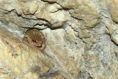 Agile frog. On the rock stock photo