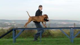 Agilidad del deporte del perro