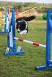 Agilidad del perro Fotos de archivo libres de regalías