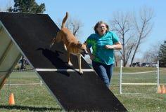Agilidad del perro de NADAC Fotografía de archivo libre de regalías