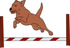 Agilidade do cão ilustração stock