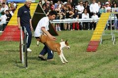 Agilidade do instrutor de cão e do cão Imagem de Stock