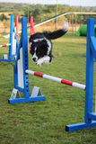 Agilità del cane fotografie stock libere da diritti
