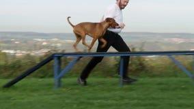 Agilità di sport del cane