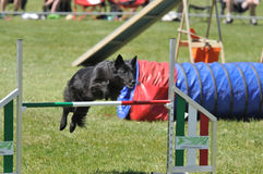 Agility Stock Images
