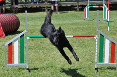 Agility Stock Photo