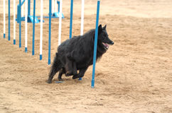Agility Royalty Free Stock Images