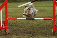 Agility competition Stock Photo