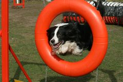 Agility competition Stock Photography