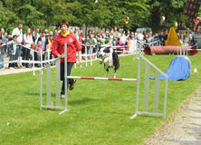 Agility competitions Royalty Free Stock Photography