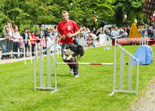 Agility competitions Royalty Free Stock Photos