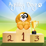 Agility dog Stock Photos
