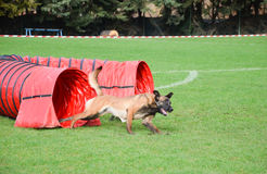 Agility dog tunnel Royalty Free Stock Photography