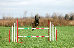 Agility jump. Dog jumping an agility jump Stock Photography