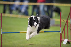 Agility sport Royalty Free Stock Photo