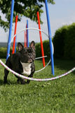 Agility training Stock Images