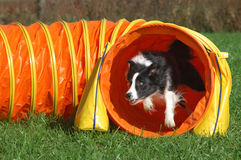 Agility tunnel stock photo