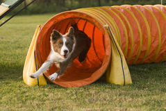 Agility tunnel-2 stock image